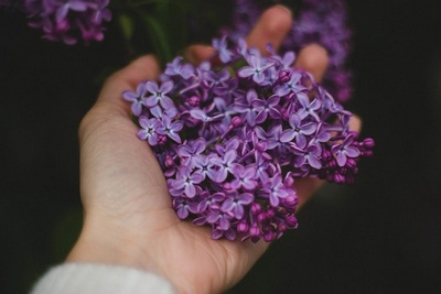 Miss Left Lavender